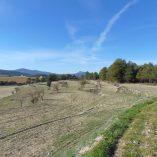 Masía Rústica en venta Mariola - terreno agrícola