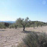 Masía con terreno en Onil-olivos